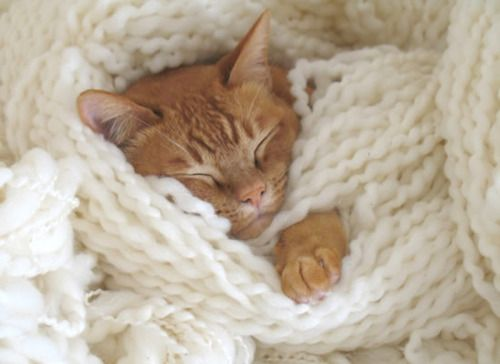 kitten in yarn